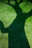 Тень старого дерева на молодой зеленой траве Стоковая Фотография