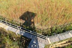 Тень сторожевой башни птицы над тростником Стоковые Изображения