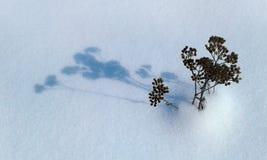 Тень сухого завода на снеге Стоковые Изображения RF