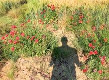 Тень человека на маках луге, Италии Стоковая Фотография RF