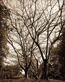 тень стоковое фото rf
