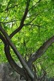 Тенденции дерева природы уникально: Западная Австралия Стоковые Фотографии RF
