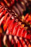 Теплая предпосылка осени Стоковые Фото