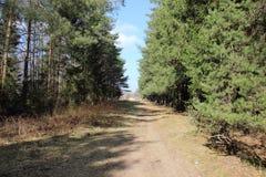 Теплое дороги леса последнее весной уже довольно!! стоковое фото rf