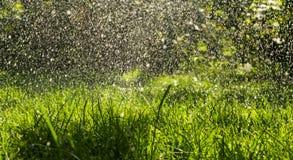 Теплый дождь лета в зеленом свежем саде Стоковые Фото