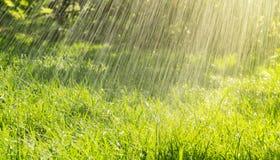 Теплый дождь лета и солнечный день Стоковое фото RF