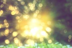Теплый желтый свет bokeh через запачканное дерево стоковое изображение rf