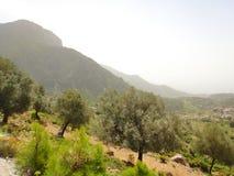 Теплый красивый ландшафт горы Горы в тумане, зеленые деревья, трава лета среди камней Путешествовать в горах Стоковое фото RF