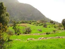 Теплый красивый ландшафт горы Горы в тумане, зеленые деревья, трава лета среди камней Путешествовать в горах Стоковое Изображение