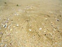 Теплый отправляет Чёрного моря bulbed стоковые изображения rf
