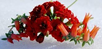 Теплый цвет тропических заводов и холодная белизна снега Стоковые Изображения