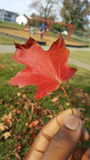 Теплая осень Стоковая Фотография RF