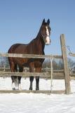 Теплая лошадь залива крови стоя в сцене загона зимы сельской Стоковые Изображения