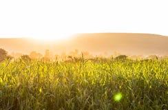 Теплая пшеница лета, рисовые поля Стоковое Изображение