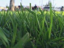 Теплая трава Стоковая Фотография RF