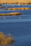 Теплое зарево захода солнца на болоте на этап Milford, Коннектикут Стоковые Фото