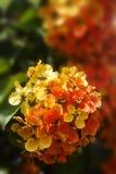 Теплые великолепные цветки Стоковые Изображения RF
