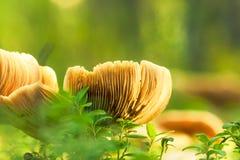 Теплые грибы Стоковые Фото