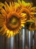 Теплые солнцецветы стоковое фото rf