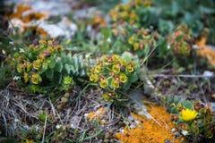 Теплые цветки горы палитры Стоковые Изображения RF
