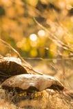 Теплый грибок Брайна Стоковое Изображение