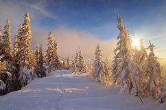 Теплый свет солнца на холодном снеге Стоковые Изображения