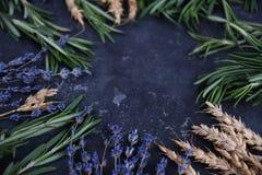 Терапия ароматности, заживление травы, Roseberry, пшеница и лаванда, космос экземпляра, темная предпосылка, селективный фокус стоковая фотография