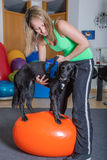 Терапия собаки Стоковая Фотография