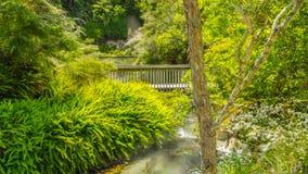 Термальная земля в Rotorua Новая Зеландия стоковые изображения
