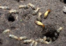 термиты колонии Стоковые Изображения