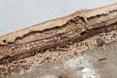 термиты стоковое изображение