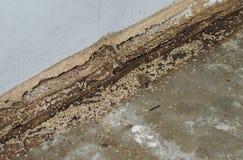 термиты стоковое изображение rf