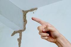 термиты Стоковые Изображения