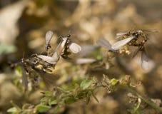 термиты swarming стоковое изображение