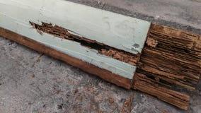 Термит, древесина - материал, насекомое, поврежденная насыпь термита, стоковое фото rf