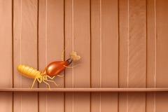 Термит, термиты на деревянной стене, термиты и спад древесины, древесина текстуры с термитом гнезда или белый муравей, поврежденн стоковое изображение rf