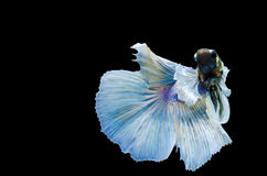 термит Стоковые Фото