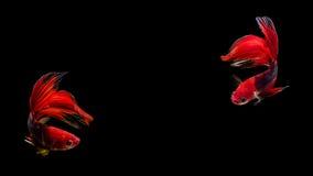термит Стоковые Фотографии RF
