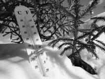 Термометр улицы с температурой Градуса цельсия и Градуса Фаренгейта в снеге рядом с молодой сосной стоковая фотография