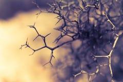 Тернии, кусты, ветви Стоковое Изображение RF
