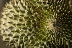 Тернии дуриана Стоковое Изображение