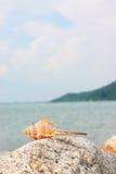 терний раковины утеса раковины Стоковые Фото