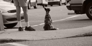 терпеливейше ждущ Стоковая Фотография RF