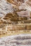 Терраса верхушки Mammoth Hot Springs Йеллоустона стоковые фотографии rf