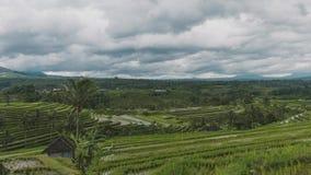 Терраса поля риса Бали Jatiluwih в Бали Индонезии на отчасти пасмурный день сток-видео
