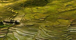 Терраса поля риса стоковое фото rf