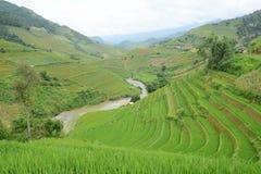 терраса риса Вьетнама Стоковые Изображения