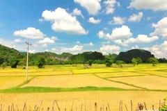 терраса риса в Лаосе Стоковое фото RF