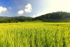 Терраса риса в chiangmai Стоковые Изображения