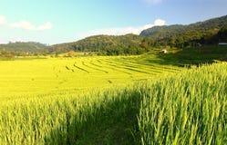 Терраса риса в chiangmai Стоковая Фотография